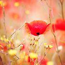 Secret Garden by Donna-R