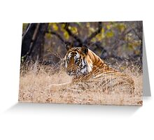Mature male Bengal Tiger Greeting Card