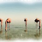 Flamingoes by Leoni Mullett