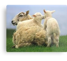 """My spring bed 11!  """"Give us a kiss"""" Metal Print"""