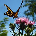 Butterfly on Flower by Don Marshall