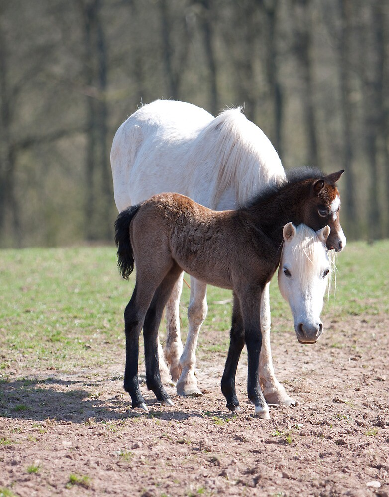 Welsh Mountain Pony mare and foal by blueinfinity