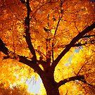Tree Of Fire by John  De Bord Photography