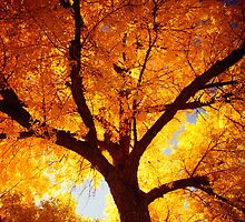 Tree Of Fire by John  De Bord Photography