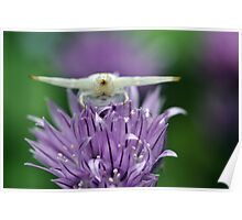 Crab Spider on Chive Poster