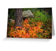 The Colorful Forest Of Fall Greeting Card