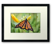 Monarch at Sarett Framed Print