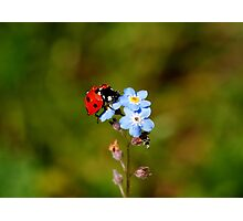Ladybird - Colorful Gardener  Photographic Print