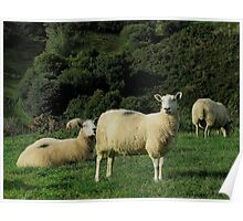 South Devon Early Autunm Sheep Grazeing In Field Near Brixam Poster