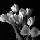 Tulips by Lee LaFontaine