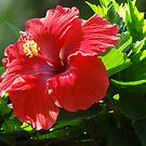 Close Up I - Rose Of Sharon - Primer Plano I - Hibisco by Bernhard Matejka