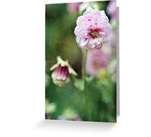 Bountiful Folds Greeting Card
