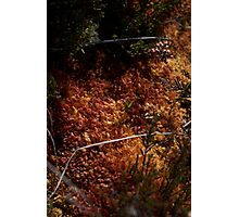 The Ground Down in the Bog Lands Photographic Print