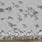 Dunlin and Avocet by Neil Bygrave (NATURELENS)