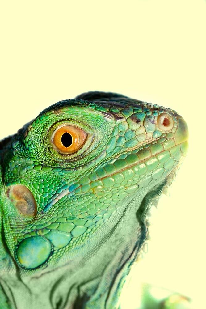 Iguana head by Mauro Rodrigues