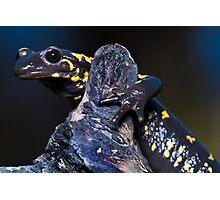 fire salamander Photographic Print