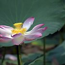Lotus Position by Kasia-D