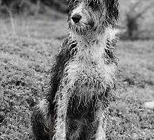 Wet domestic dog by Mauro Rodrigues