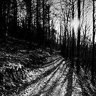 Sunlight through the Trees, Lindinny Woods, Yair, Scottish Borders by Iain MacLean
