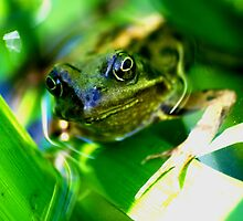 Frog In The Pond by FourPointPhoto