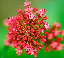 Macro Close Up Flower by FourPointPhoto