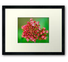 Macro Close Up Flower Framed Print