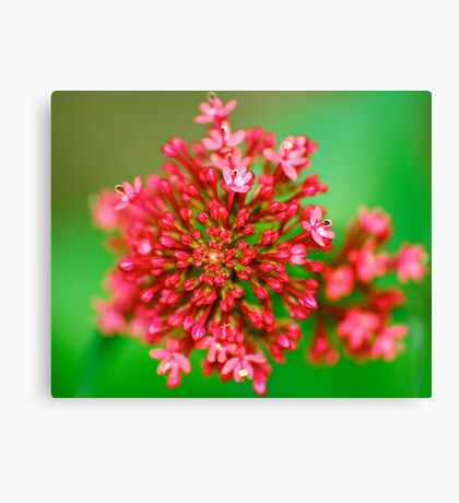 Macro Close Up Flower Canvas Print