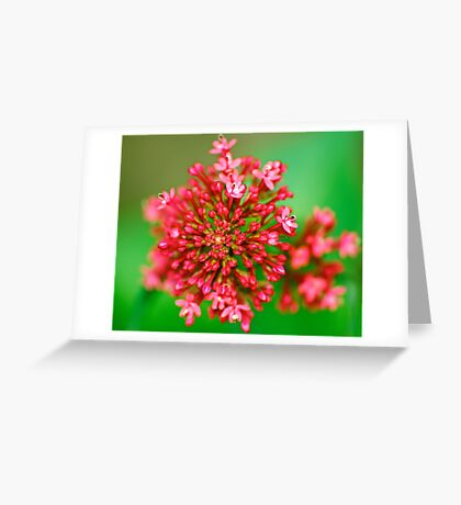 Macro Close Up Flower Greeting Card