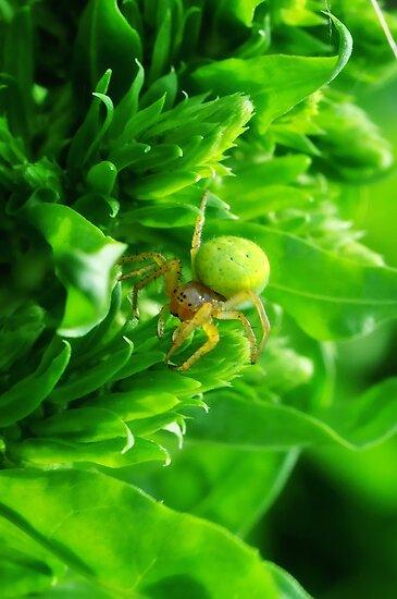 Green Spider 2.0 by Yhun Suarez