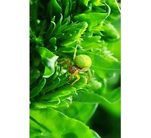 Green Spider 2.0 Photographic Print