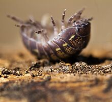 pill bug in trouble by Mauro Rodrigues