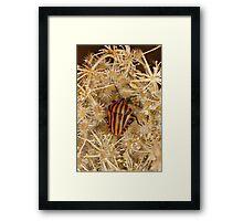 Striped shield bug Framed Print