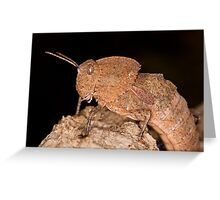 Toad Grasshopper Greeting Card