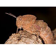 Toad Grasshopper Photographic Print