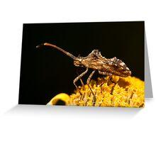 Centrocoris variegatus insect Greeting Card
