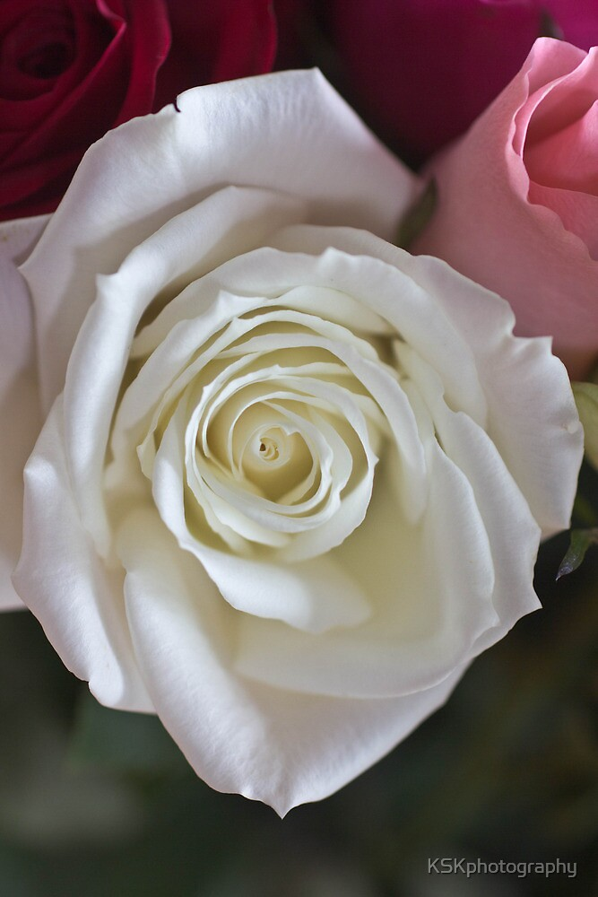 White rose  by KSKphotography