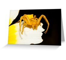 Yellow crab spider (Thomisus onustus) Greeting Card