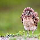 Baby Fluff by Kathy Cline