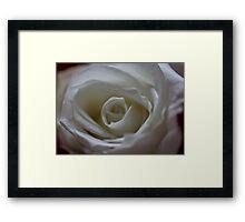 White rose for June Framed Print