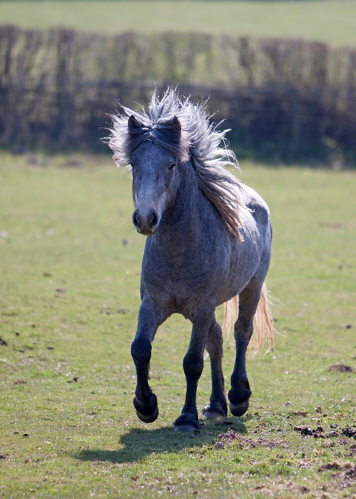 Eriskay Pony by blueinfinity