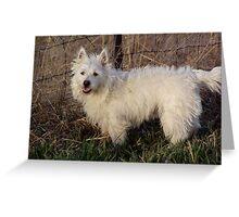 Westie Farm Dog! Greeting Card