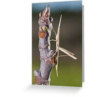 weird grasshoppper Greeting Card