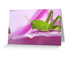 Green grasshopper Greeting Card