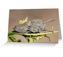 Gray grasshopper Greeting Card
