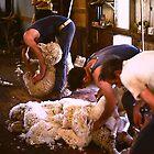 Shearing by diggle