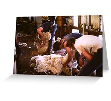 Shearing Greeting Card