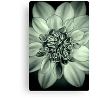 A Dahlia thinking happy thoughts Canvas Print