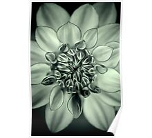A Dahlia thinking happy thoughts Poster