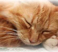 Sweet Dreams by DebbieCHayes