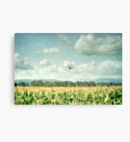 Summer Corn Canvas Print
